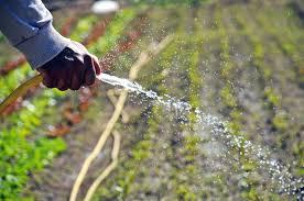 LA HORA DE DISEÑAR E IMPONER UN NUEVO MODELO AGROALIMENTARIO